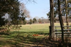 Chatham Farm
