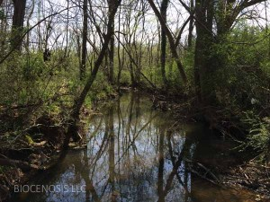 Loves Creek Assessment Invasive Veg 032416